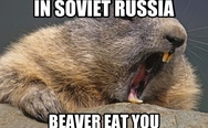 In Soviet Russia beaver eat you