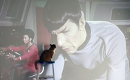 Star Trek cat