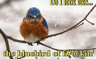 Do I look like the bluebird of happiness