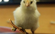 Haters gonna hate. A chick on the skateboard.