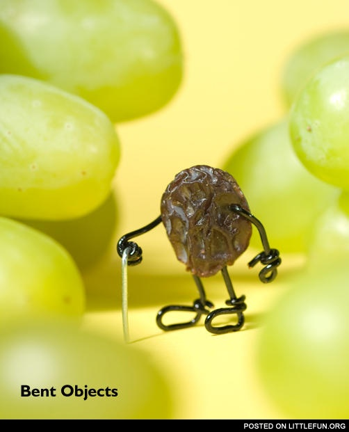 Old grape