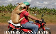 Haters gonna hate. A goat on the bike.
