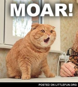 Bildergebnis für cat meme moar