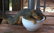 """I'm full"", - Squirrel"
