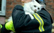 Firefighter in Denmark rescues cat from burning house