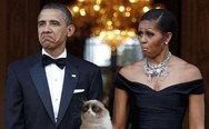 Obama and Grumpy Cat