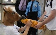 That weird people in horse masks