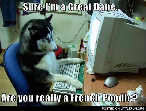 Are you really a French Poodle?