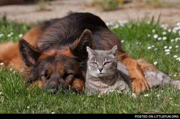 Cat and dog buddies