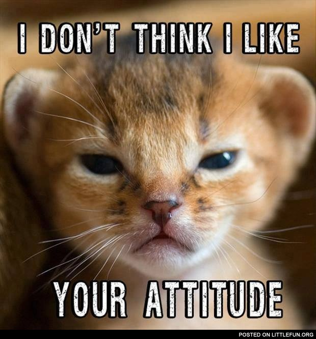 I don't like your attitude