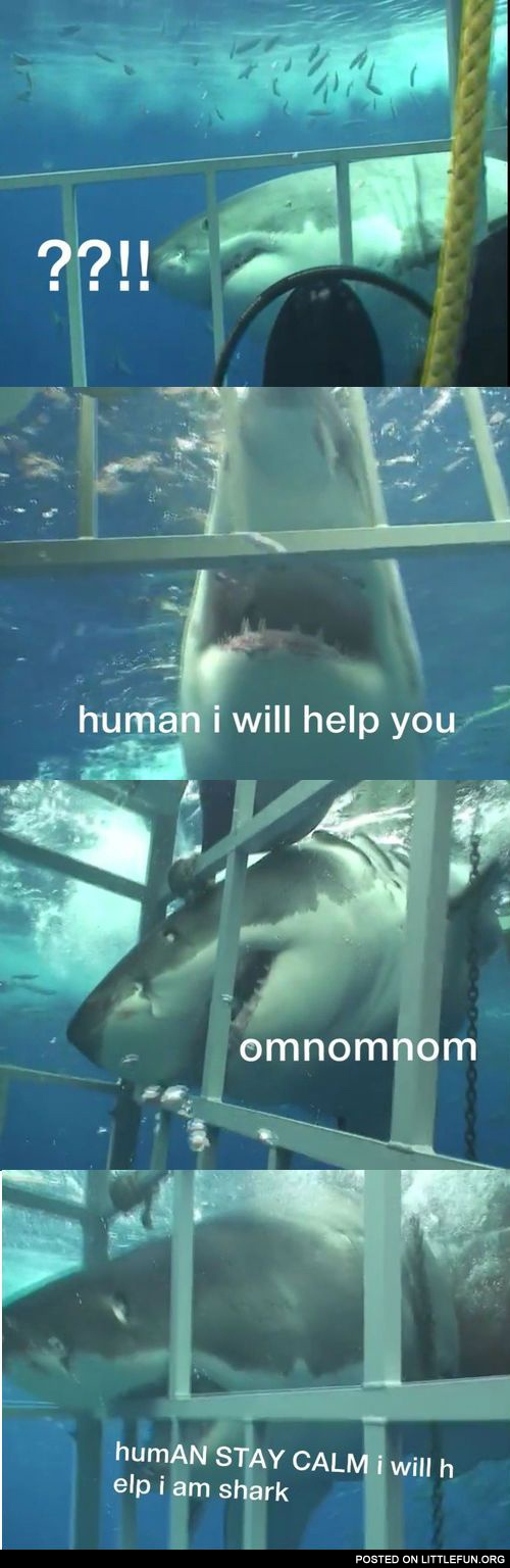 Shark will help you