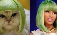 Nicki Minaj vs. Cat