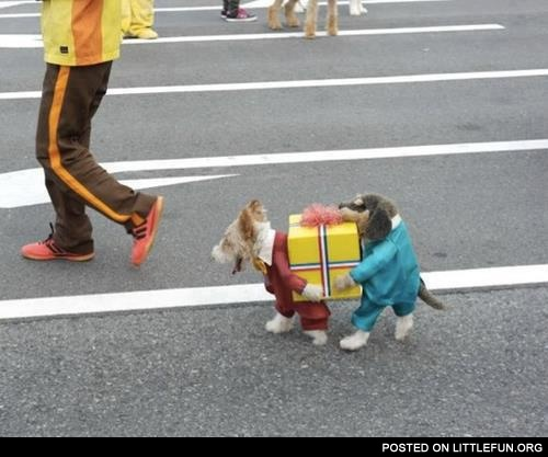Awesome dogs costume