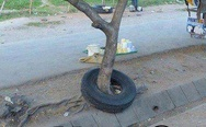Tree and tire