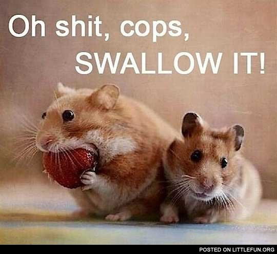 Cops, swallow it
