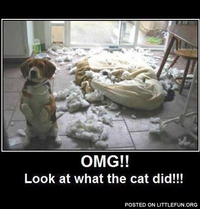 Look at what the cat did