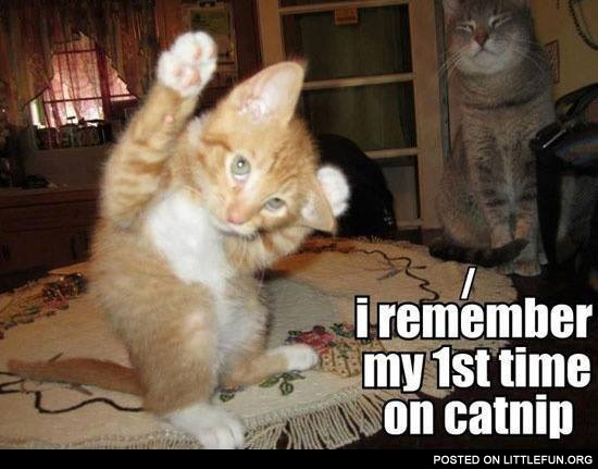 First time on catnip