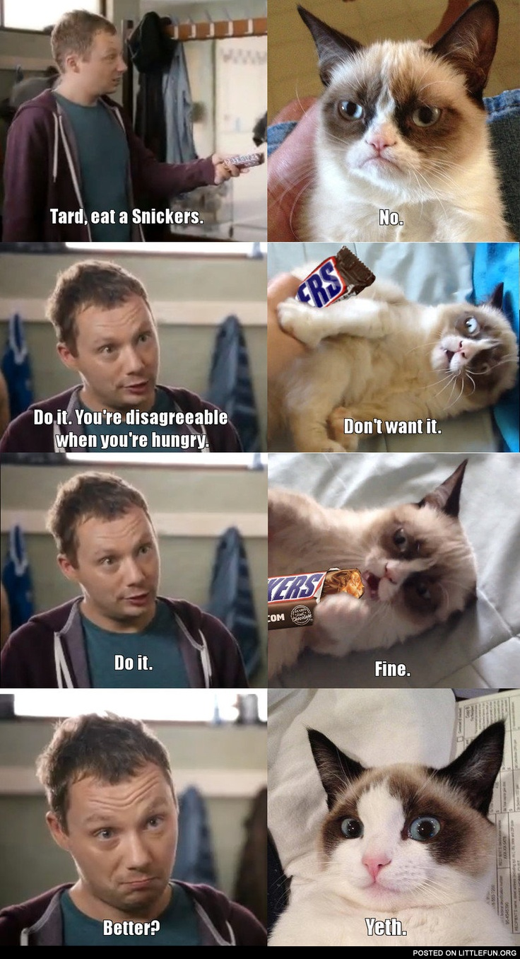 Grumpy cat and Snickers