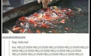 Dog and koi
