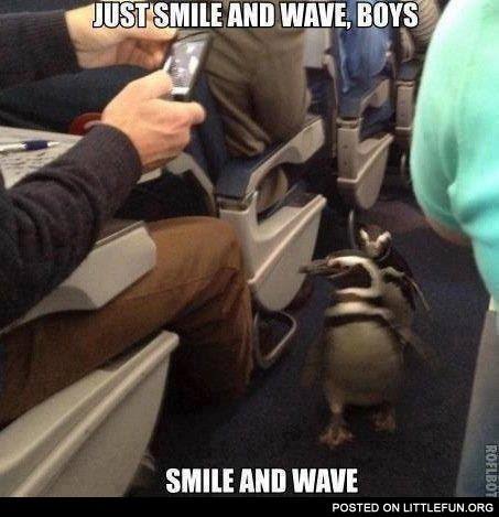 Penguins at the plane