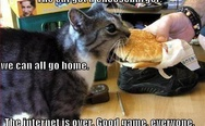 The cat got a cheeseburger