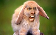 Nicolas Cage rabbit