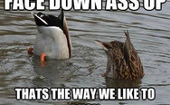 Thats the way we like duck