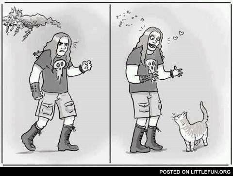 Heavy metal and kitty