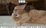 Hmm... What if the human is not my pet