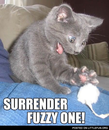 Surrender, fuzzy one