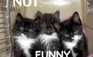 Kittens are not amused