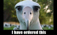 I have ordered this albatross to stare at you