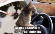 This is bat country