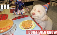 Dog's birthday