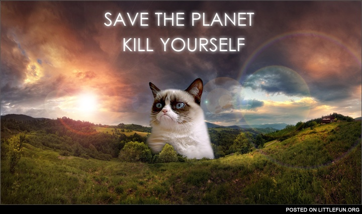 Grumpy cat gives you advice