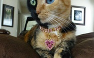 Two-faced cat. Nice necklace btw.