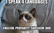 Grumpy cat speaks 4 languages