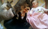 Baby sleeping with cats
