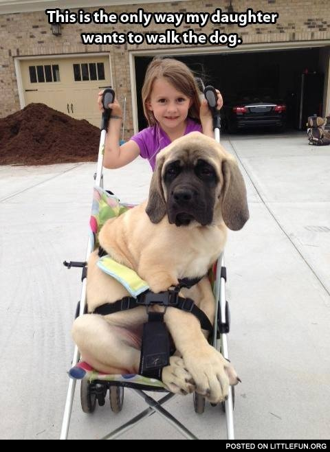 This is the only way my daughter wants to walk the dog