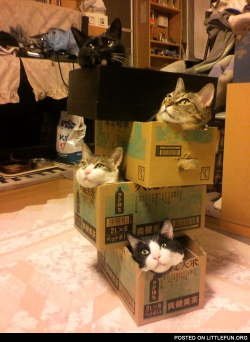 Cats in the boxes