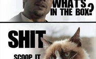 Grumpy cat and Brad Pitt