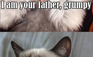 Grumpy, I'm your father