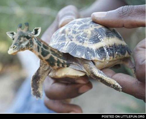 Giraffic turtle