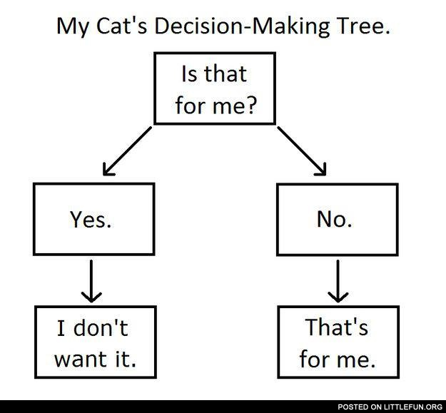 My cat's decisions