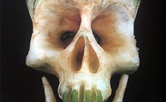 Apple scull