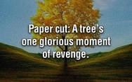 Papercut: A tree's one glorious moment of revenge