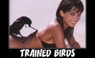 Trained birds