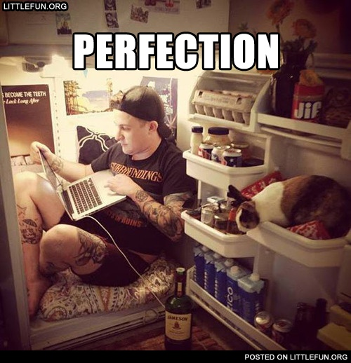 A place in the fridge with laptop and kitty. Perfection.