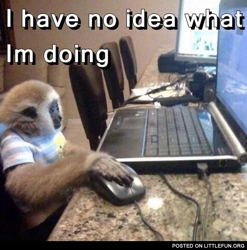 Monkey with laptop. I have no idea what I'm doing.