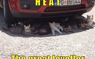 Cats under the car. Heat, the great leveller.